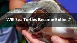 Will Sea Turtles Become Extinct?