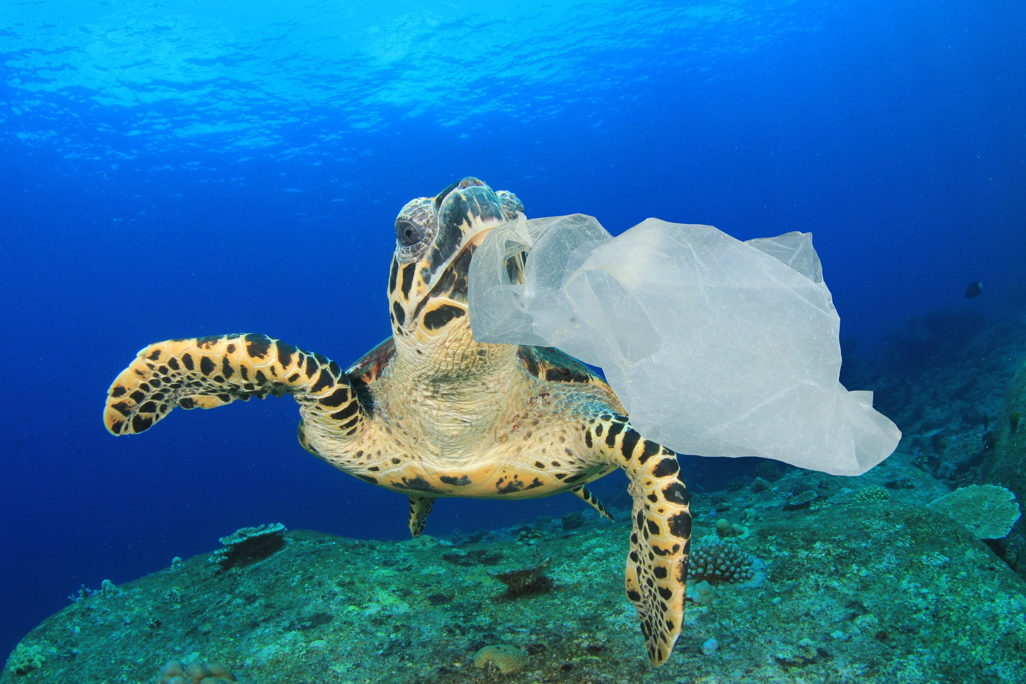 "How The Plastic Bag ""Syndrome"" Affects Sea Turtles"
