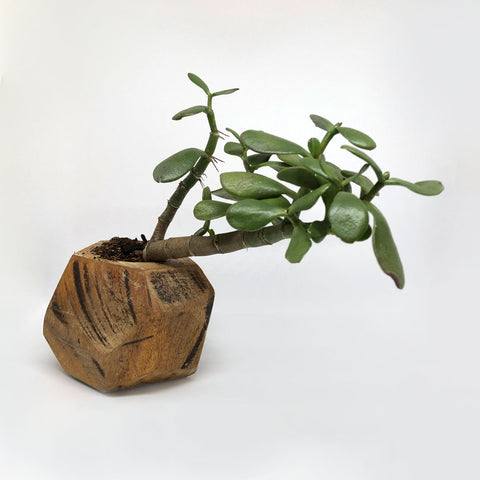 Wooden Geometric Planter