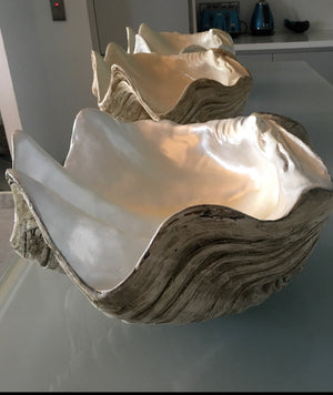 Extra large 50cm Faux Giant Clam - Natural base with shimmering pearly interior -