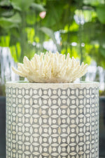 Faux Large Finger Coral - With Glass Plinth