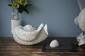 Extra large 50cm Faux  Giant clam  -  Special Chinese New Year discount code  !