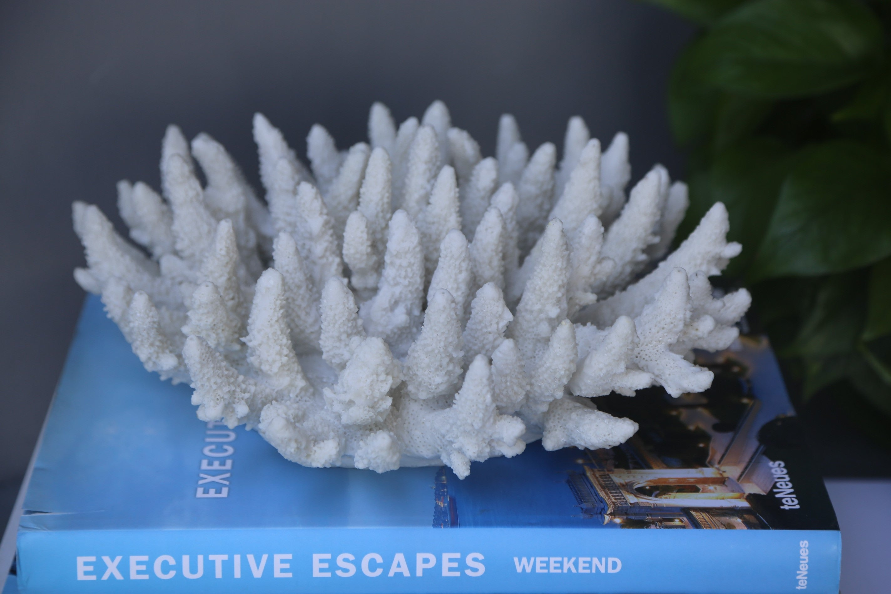 White Finger Coral