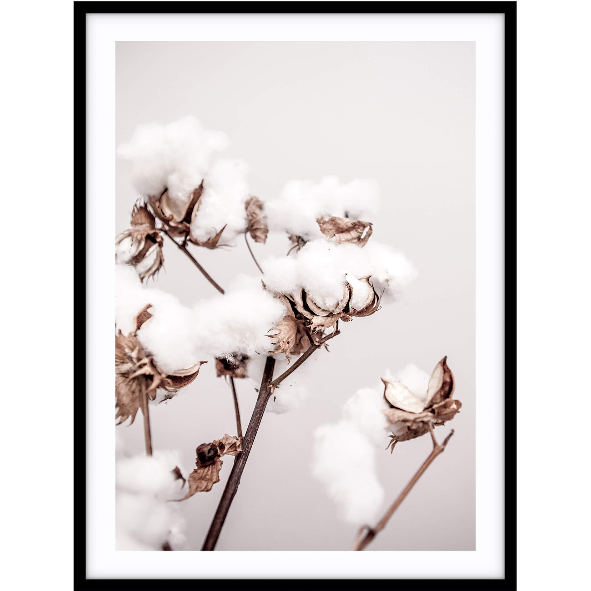 Love your space Cotton plant photographic print | Various sizes | Free Shipping |The Home Maven