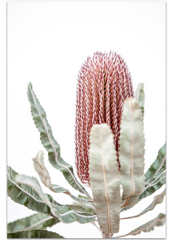 Love your space | Photographic Print Banksia III |The Home Maven