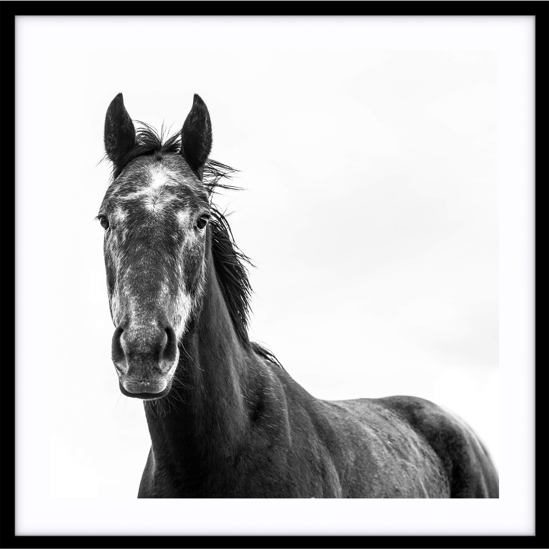 Black Beauty Horse I (Square) Photographic Print |various sizes |The Home Maven