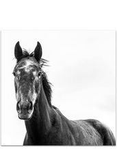 Black Beauty Horse I (Square) Photographic Print |$55 - $129 |The Home Maven