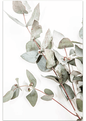 Love your space Eucalyptus I photographic Print |The Home Maven
