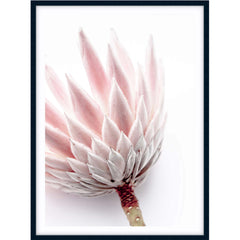 King Protea I Photographic Print styled -$35 - $119 |The Home Maven