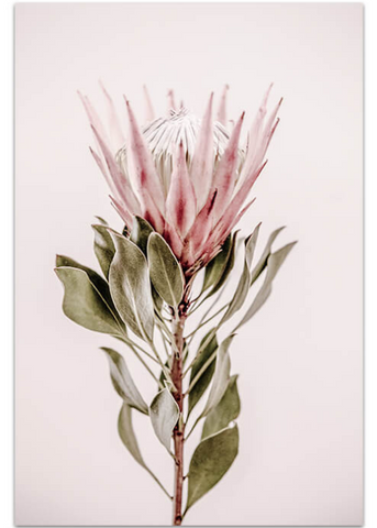 Love your space blushing king photographic Print - $35 - $119 |The Home Maven