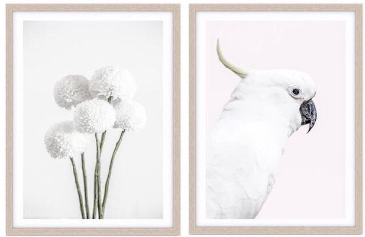 White cockatoo photographic print - Wall Art - $39.95 - $129.95 | My House Loves