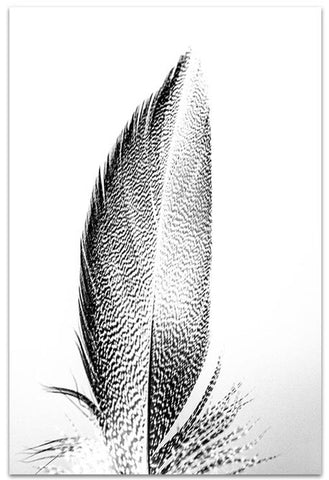 Love your space Feathers I - Wall Art Photographic Print - $35-$119 | The Home Maven