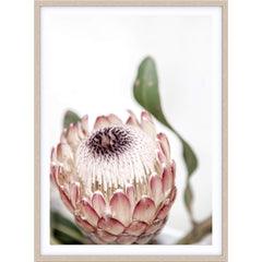 Love your space Protea II photographic print | Various sizes | The Home Maven