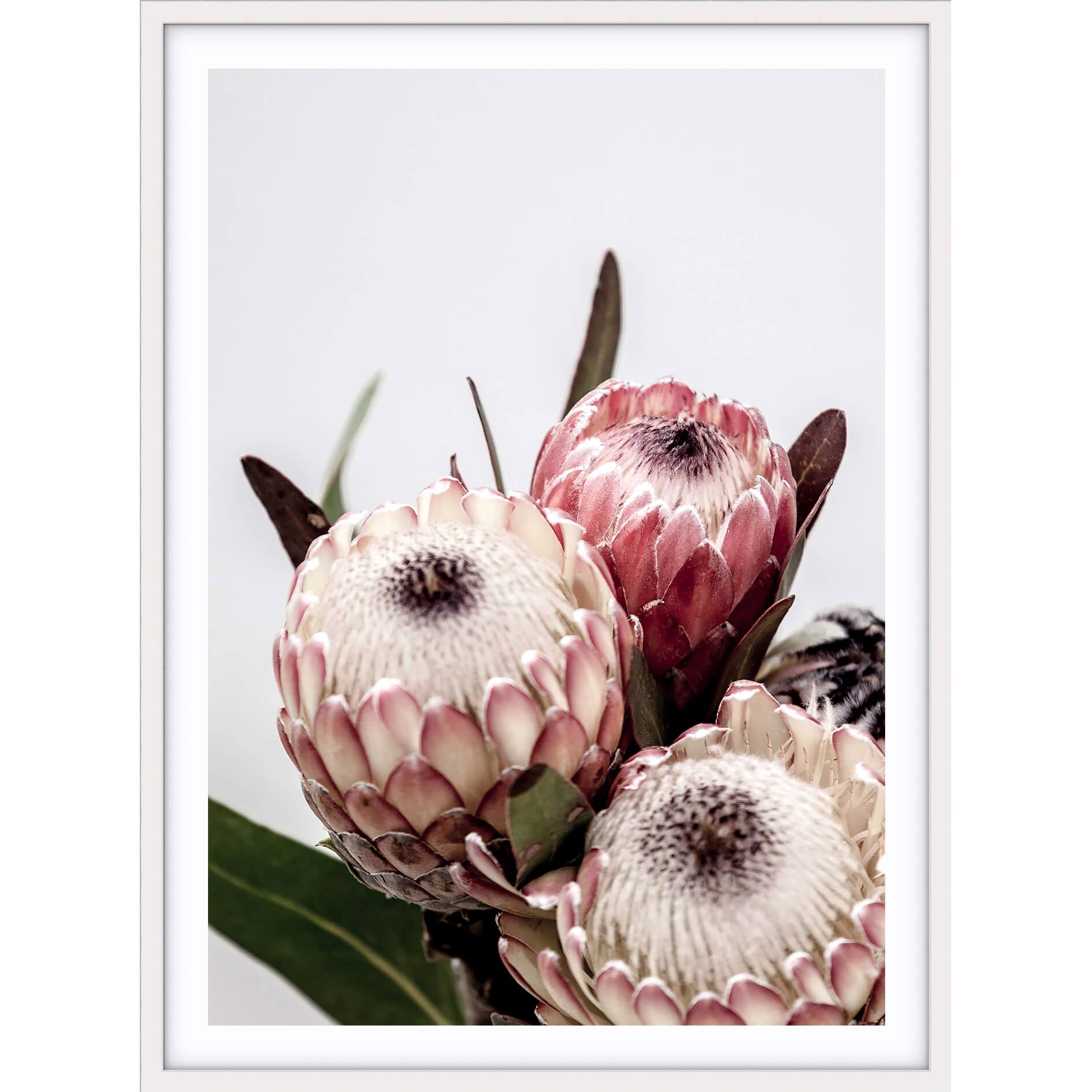 Love your space Protea I photographic print | Various sizes | The Home Maven