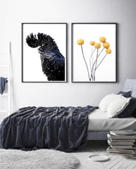 Black Cockatoo - Photographic Print - $39.95 - $129.95 |My House Loves
