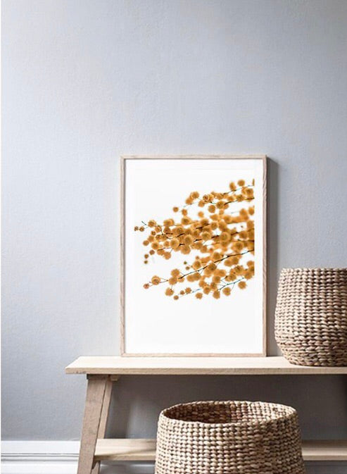 Love your space | Australian Golden Wattle - Photographic Print  |The Home Maven