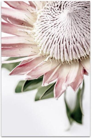 King Protea II - Photographic Print - $39.95 - $129.95 |My House Loves