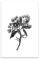Love your space Botanical III Sketch Print - $35 - $85 |The Home Maven
