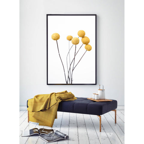 Billy Buttons Photographic Print | Various sizes - $35 - $119 |The Home Maven
