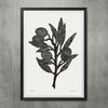 Olive Branch Poster Black/White