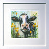 Cow with White Frame and White Mount