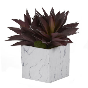 PURPLE ALOE PLANTS IN WHITE MARBLED CERAMIC CUBE