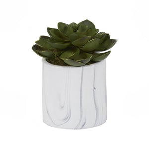 SMALL GREEN ECHEVERIA IN WHITE MARBLED CERAMIC CYLINDER