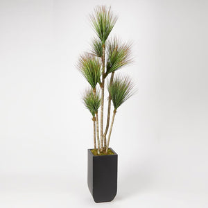 ′ ONION GRASS TREE IN SQUARE METAL PLANTER