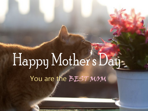 Best Mother's Day Gifts for the Cat Mom/You