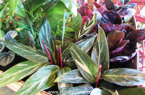 New houseplants arriving in the houseplant boutique shop on Wednesday!