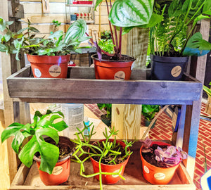 Locally grown houseplants  in our Leonardtown plant boutique store located in beautiful Southern Maryland