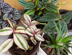 These houseplants were just listed today