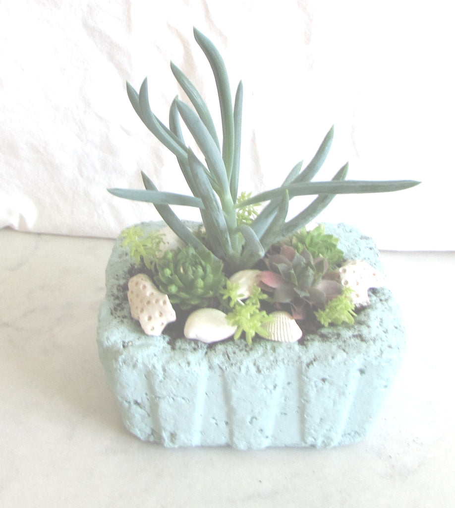 Making up some Succulent Gardens for Anne Marie Garden Show