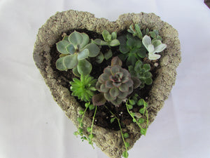 Succulent Class February 7 11am Shepards Old Field Market