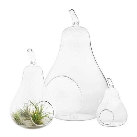 "6.5"" Tall - Pear Glass Terrarium, Clear"