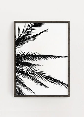 Palm Leaf Edges Poster