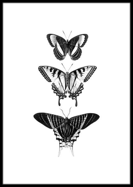 Butterfly Drawing Poster