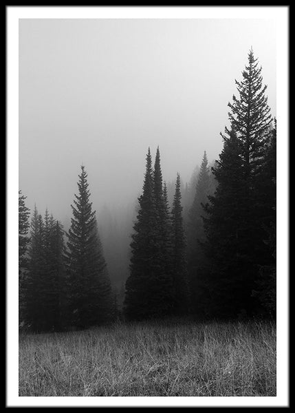 Misty Forest Morning Poster