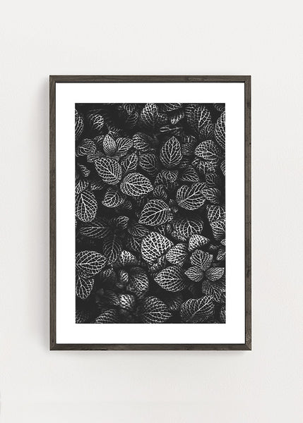 Deep Forest Plants Poster