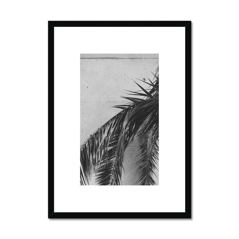 Palm leaf plant Framed Print