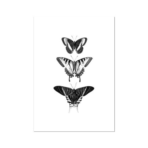 Butterfly line drawing Fine Art Print