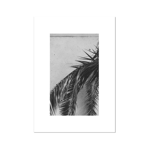 Palm leaf plant Fine Art Print