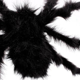 Black Furry Spiders!