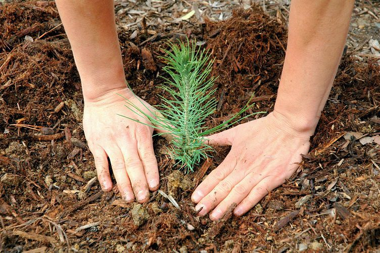 Plant Some Trees And Save Some Green: This Is How Planting Trees Saves You Money