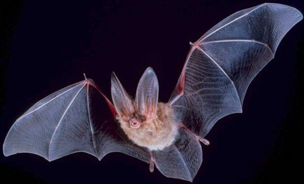 Not A Fan Of Mosquitoes? Here's How To Attract Bats To Your Yard