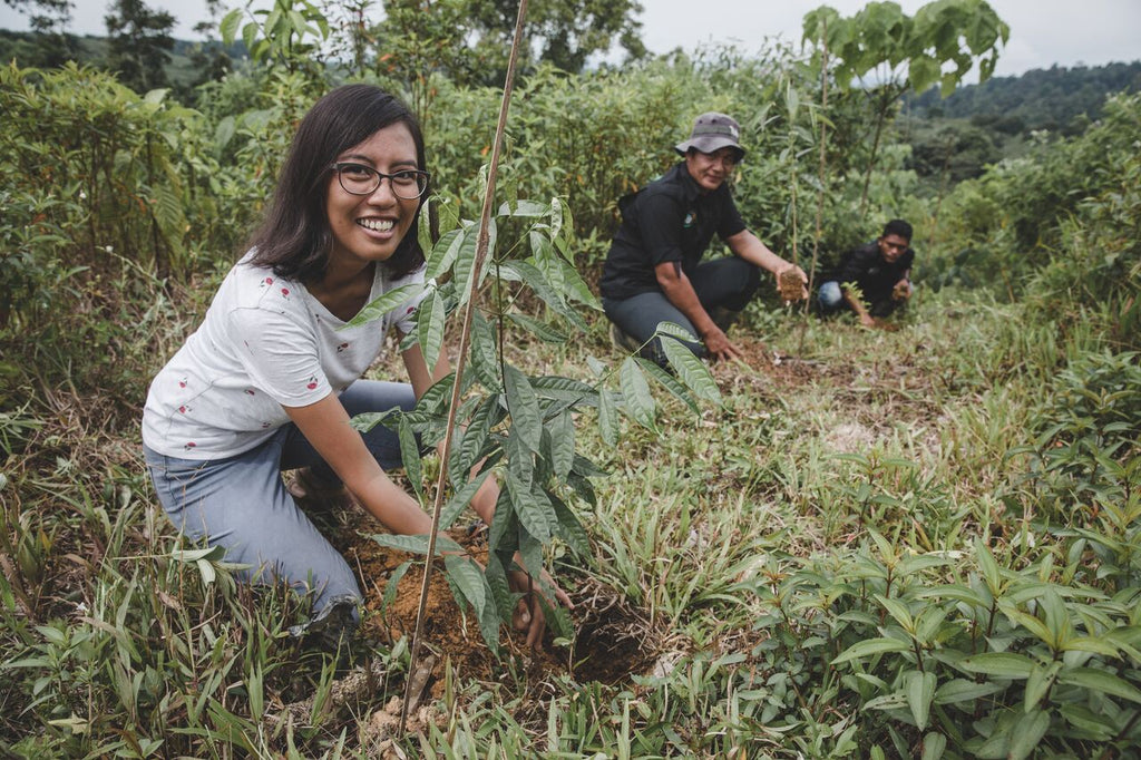 We've Started Planting In Indonesia! Here's How Your Trees Will Help