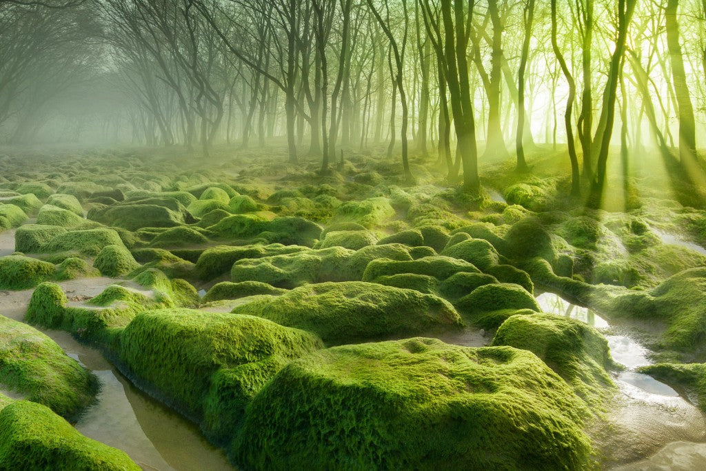 12 Of The Most Mysterious Forests In The World