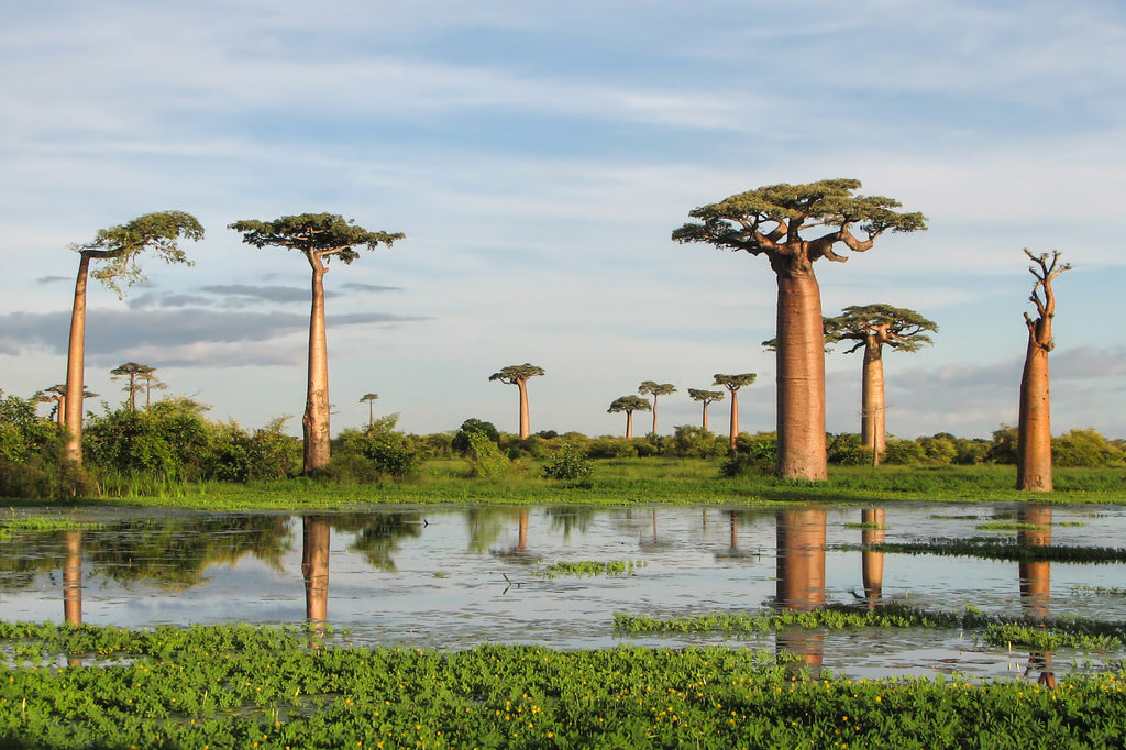 5 Of The Most Critically Endangered Trees