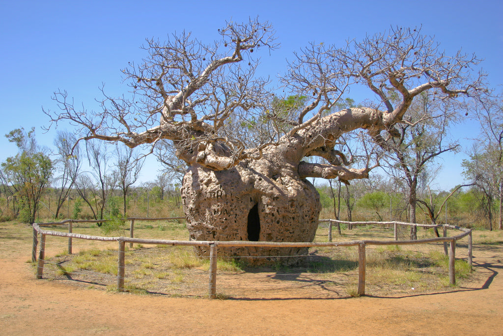 5 Amazing Stories And Folktales About Trees