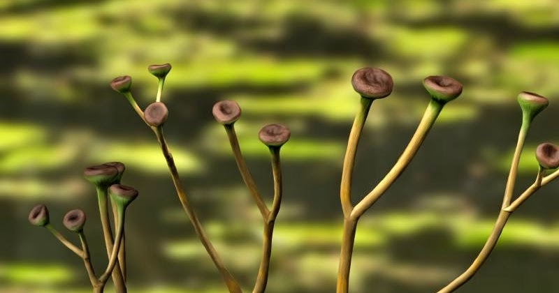 5 Bizarre, Beautiful, And Interesting Plants That Have Gone Extinct